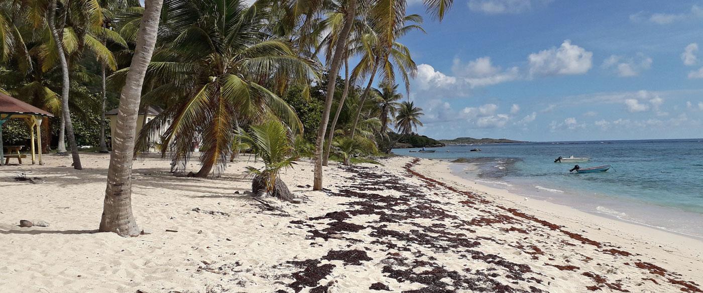 """La Désirade, l'isola da sogno degli """"indesiderabili"""""""
